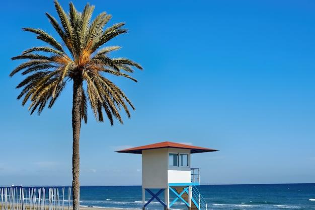 Strand mit großer palme an einem sonnigen tag
