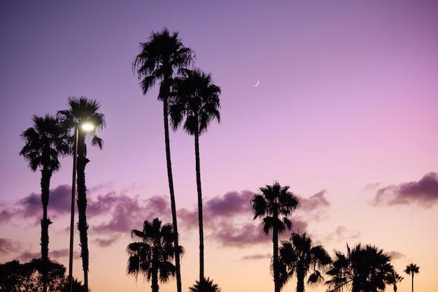 Strand mit palmenschattenbild und purpurrotem himmel in san diego