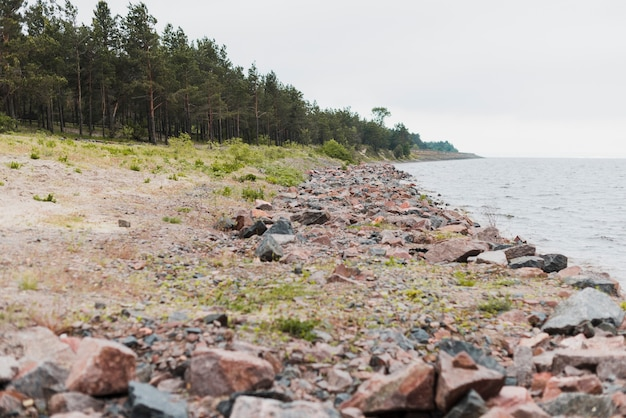 Strand mit wald im hintergrund