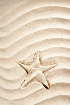 Strand seestern drucken weißen karibischen sand sommer