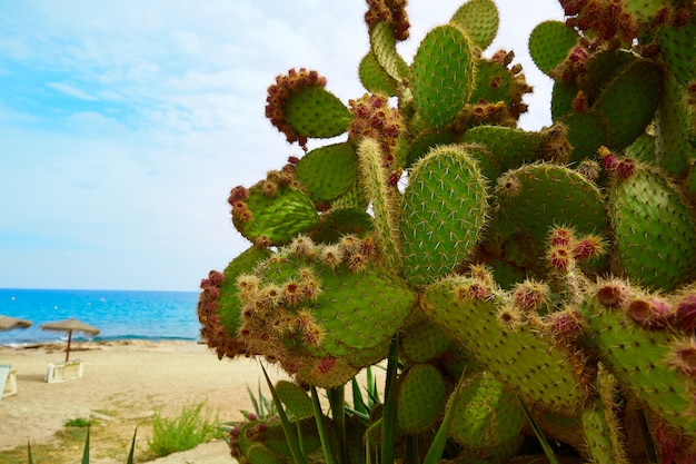 Strand spanien spanien almeria mojacar