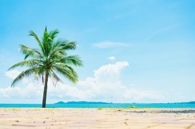 Strand und kokospalme mit blauem himmel
