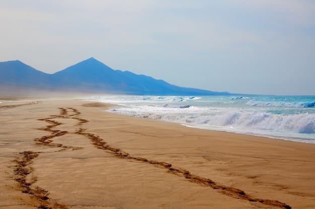 Strand von cofete fuerteventura in kanarischen inseln