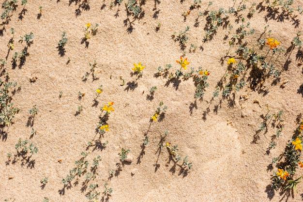 Strandblumen im sand