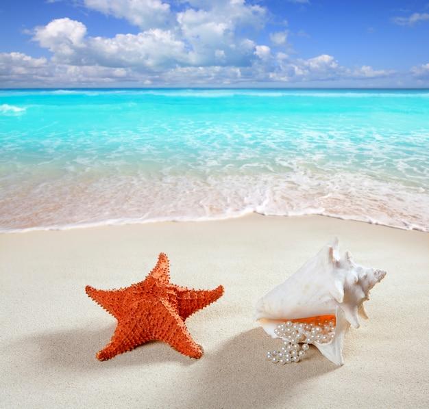 Strandsand perlenkette muschel seestern sommer