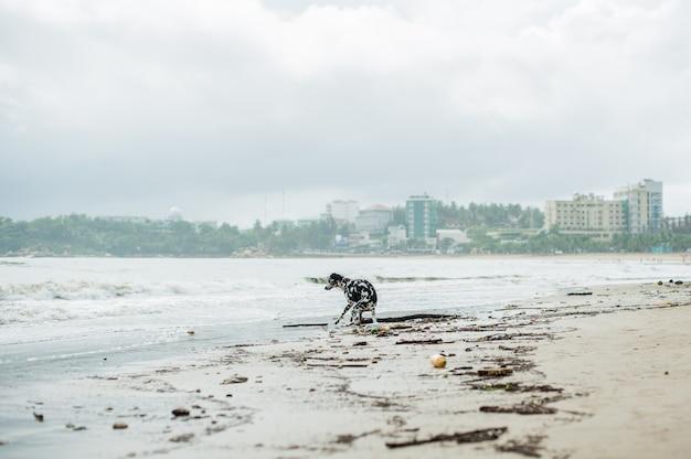 Strandverschmutzung. plastikflaschen und anderer müll am meeresstrand