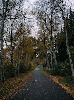 Straße bedeckt mit getrockneten blättern, umgeben von bäumen im herbst