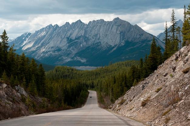 Straße, die durch einen wald, maligne see-straße, jasper national park, alberta, kanada überschreitet