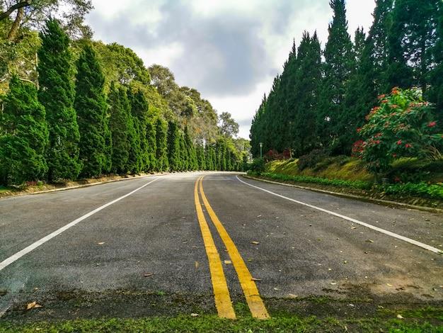 Straße durch einen wald