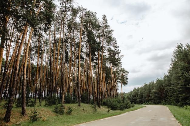 Straße durch kiefernwald trotz grüner frühlingswiesen