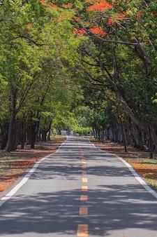 Straße durch und bäume im park.