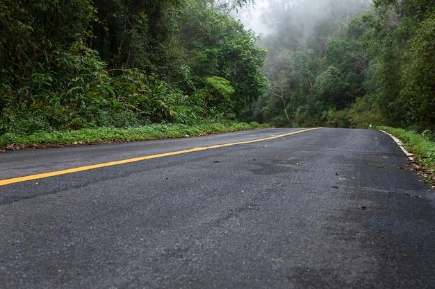 Straße herein mit naturwald und nebeliger straße des regenwaldes
