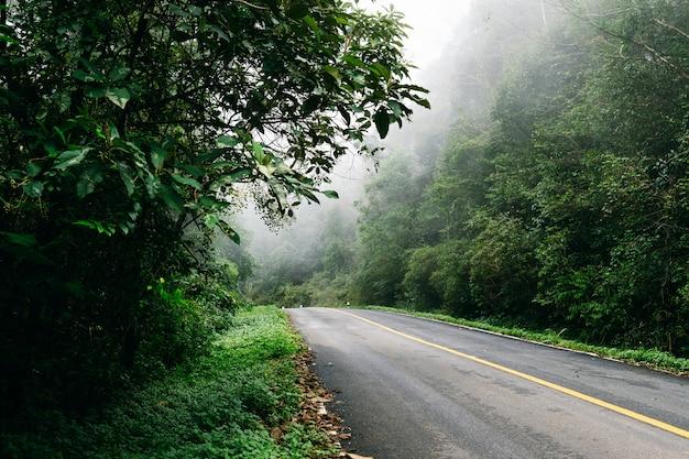 Straße herein mit naturwald und nebeliger straße des regenwaldes.