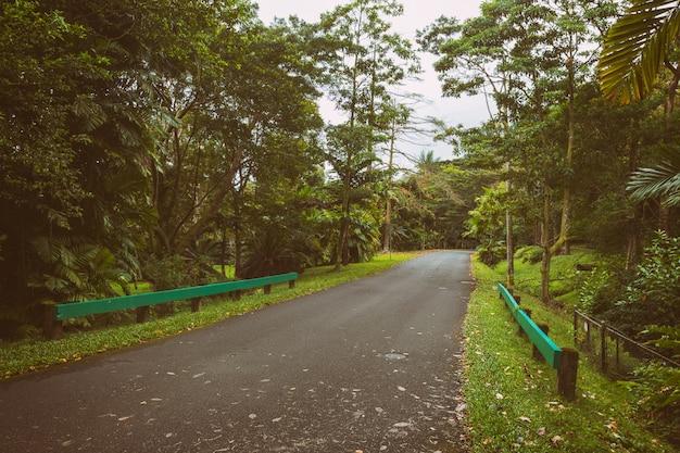 Straße im botanischen garten am nebligen tag, insel oahu, hawaii