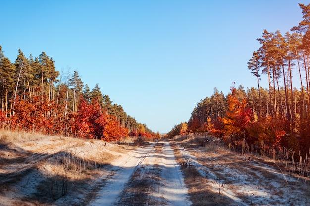 Straße im herbstlichen wald. sandweg umgibt mit kiefern und roten eichen