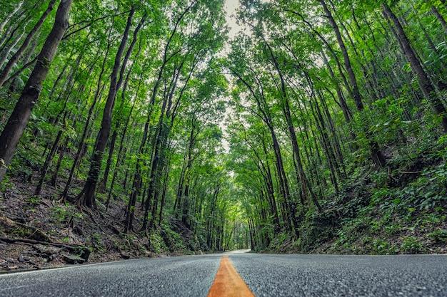 Straße im tropischen regenwald (künstlicher wald). bohol. philippinen