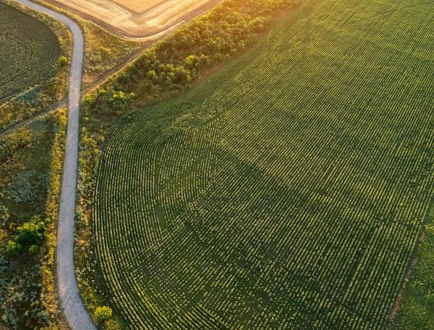 Straße in der nähe der plantage und felder. feld während des sonnenaufgangs