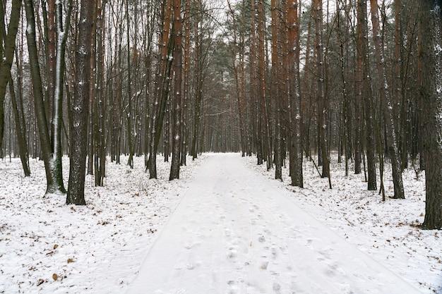 Straße in einem verschneiten wald. winterlandschaft