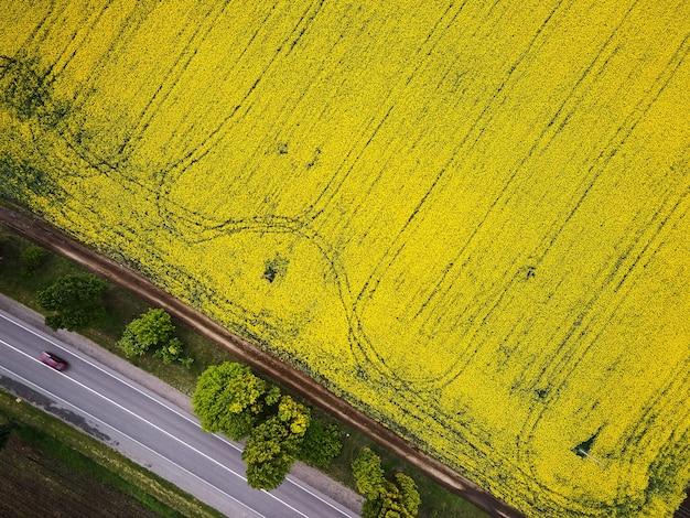 Straße mit autos durch feldluftaufnahme des frühlingsrapsblumenfeldes, vogelperspektive von einer drohne einer vorbeiziehenden rapsernte