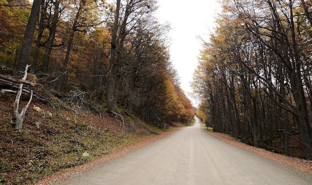 Straße mit bäumen.