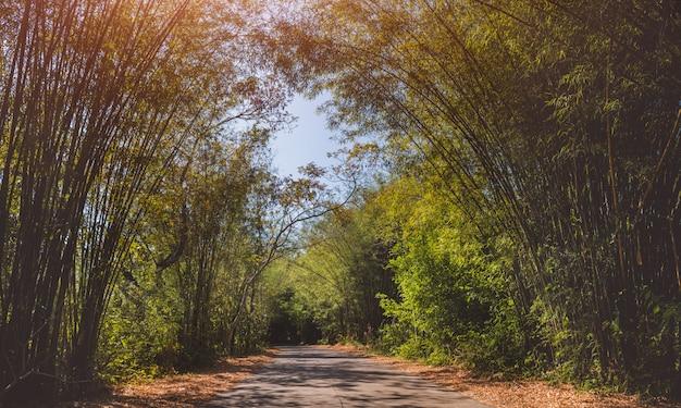 Straße mit bambustunnel.