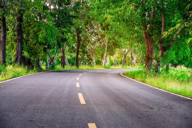 Straße mit baumnatur im sonnenlicht