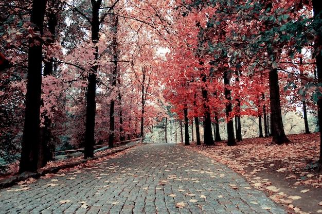 Straße mit pflastersteinen im herbstpark gepflastert, weg zum gehen an den seiten, wo bäume mit gelben blättern