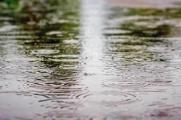 Straße mit wasserpfützen bei regen und ausstellungsbäumen. regentropfen plätschern in einer pfütze