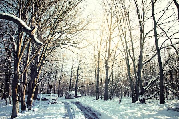 Straße und bäume im schnee bedeckt
