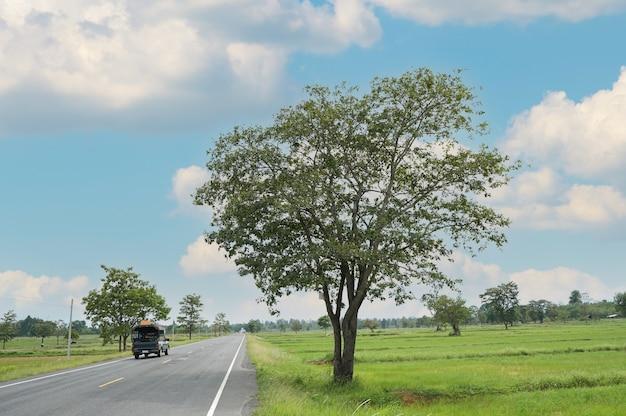 Straße und himmel mit autos, die durch reisfelder in der landschaft am sonnigen sommertag gehen.