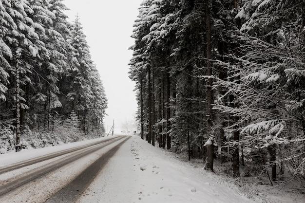 Straße und immergrüner wald im winter