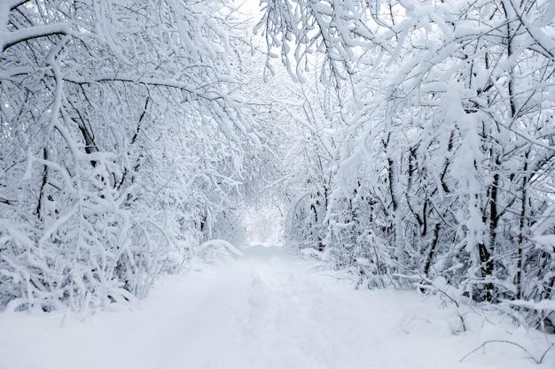 Straße und schneebedeckte bäume