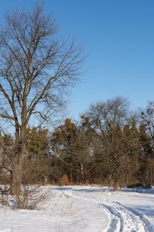 Straße zum winterwald vom dorf, winterzeit