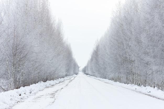 Straße zwischen birken