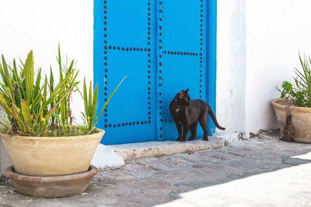 Straßen von sidi bou said, tunesien. schwarze katze in der nähe des hauses.