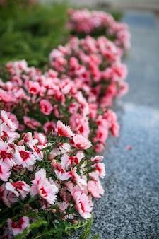 Straßenblumenbeet