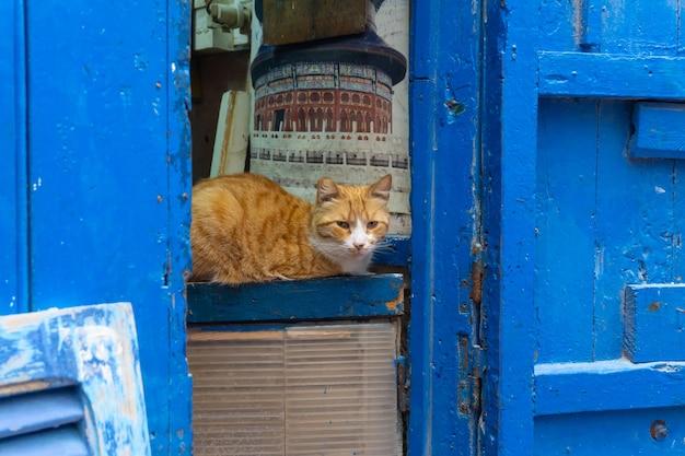 Straßenkatze auf den straßen von marrakesch und von essaouira in marokko