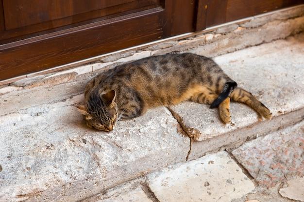 Straßenkatze liegt auf der straße, das problem der streunenden katzen.