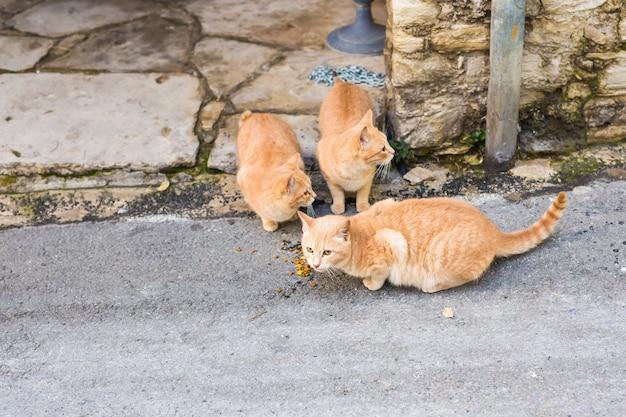 Straßenkatzen, die nahrung essen - konzept der obdachlosen tiere.