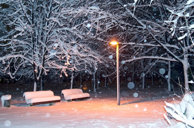 Straßenlaternenpfahllicht zwischen schneebedeckten bäumen und bänke im park. nachts sehen