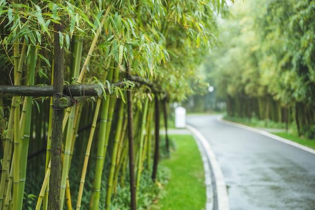 Straßenrand frische grüne bambusbäume