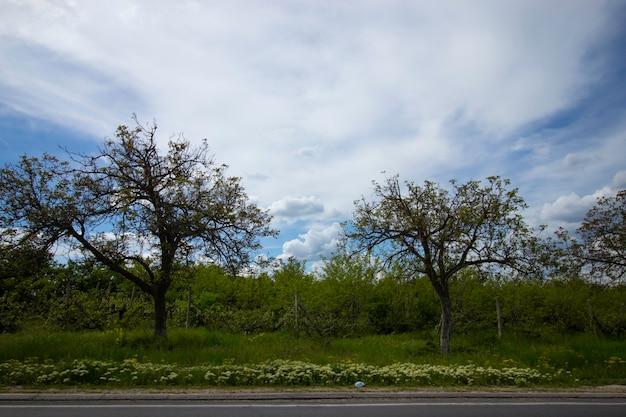Straßenrand und schöner bewölkter himmel in bewegung aus dem autofenster