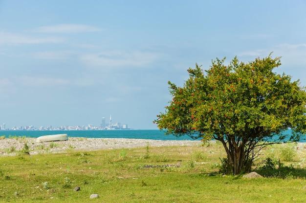 Strauch mit granatblüten am strand mit blick auf die stadt batumi georgia