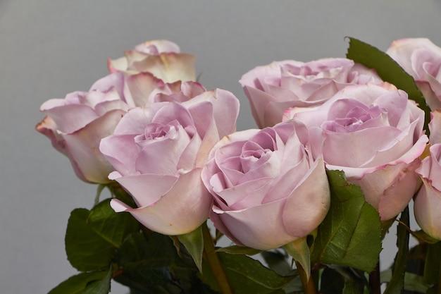 Strauß blühender rosa rosen auf einem rosa,