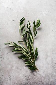 Strauß der frischen olivenbaumzweige auf einem alten weinlesegraubeton.