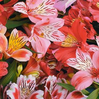 Strauß der orchideen schöner, frischer, leuchtend roter, gelber, lila hintergrund der blumen. die blüten sind groß, saftig und duftend. layout für einen gruß oder eine grußkarte.