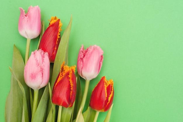 Strauß der rosa und roten tulpen auf einem grün
