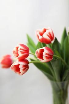 Strauß der schönen zweifarbigen tulpen in der vase lokalisiert auf weißer oberfläche