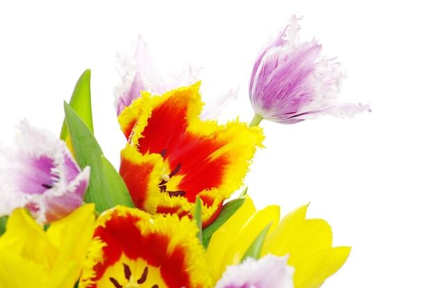 Strauß der tulpen auf weißem hintergrund