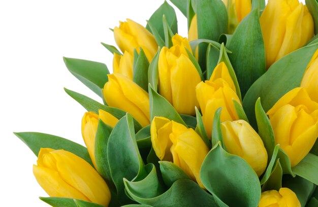 Strauß gelber tulpen, kopierraum.